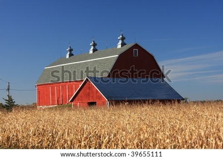 red Wisconsin dairy barn with corn field - stock photo