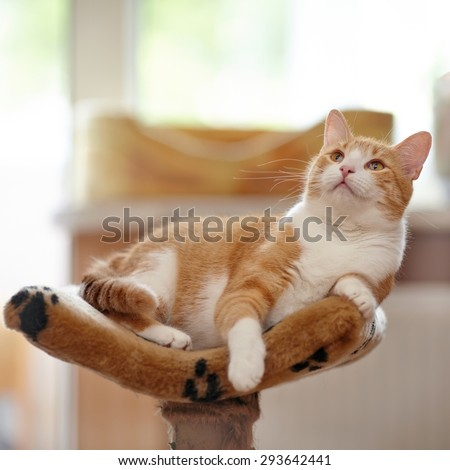 Red with white cat lies on a sofa. - stock photo