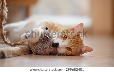 Red with white the striped playful cat lies on a floor with a toy. - stock photo