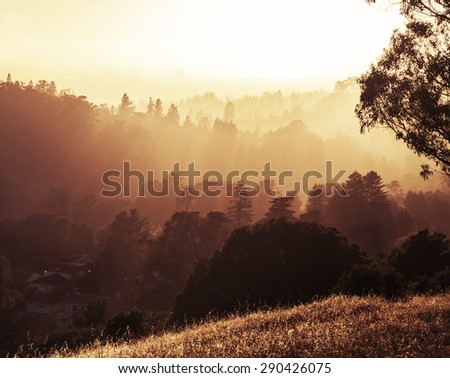 Red woods at a sunset. Tree against a sunset light sun and orange sky, Sunset - stock photo