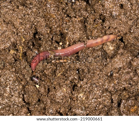 red worm manure - stock photo