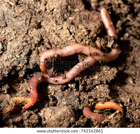 red worm manure. macro