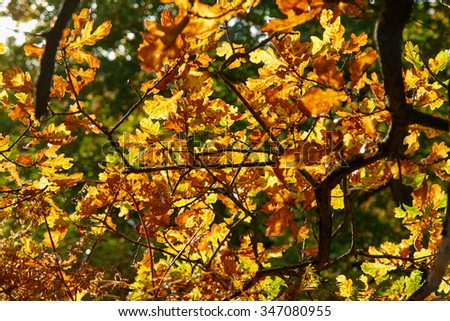 Red yellow and colorful autumn fall colors in the forest classical nature outdoors image - stock photo