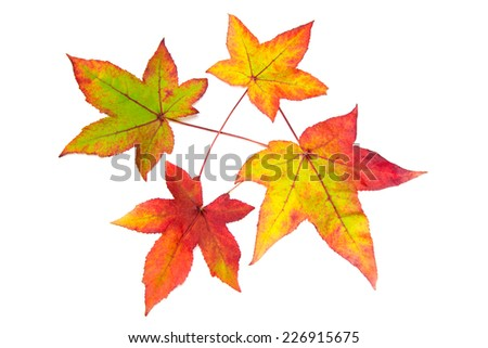 Red yellow and green autumn leaves isolated on white background - stock photo