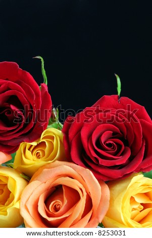 Red, yellow and peach color roses with black background. - stock photo