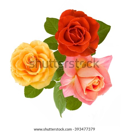 Red,yellow and pink rose flowers bunch isolated on white background - stock photo