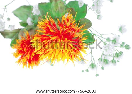 red-yellow flower on white background with grass .shallow dof - stock photo