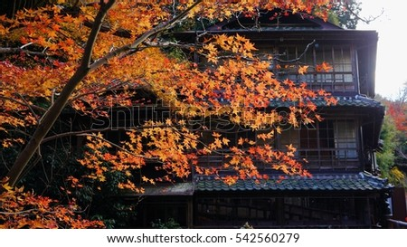 Red yellow maple leaves with an ancient building, Autumn in Japan