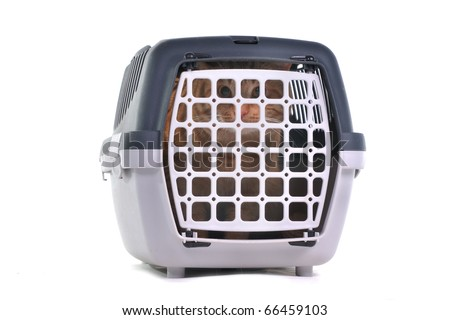 Red Young Cat Looking Out of the Grey Transportation Cage Isolated On White Background