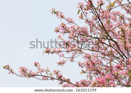 Redbud flowers on a tree - stock photo