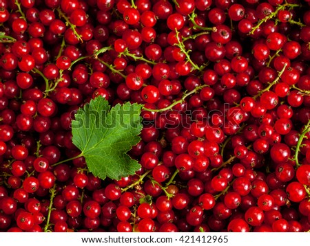 Redcurrant or red currant berries close up texture background