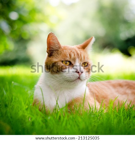 reddish brown cat lying in the grass