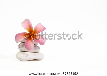Reddish pink frangipani flower on white rock isolated on white for spa concept - stock photo