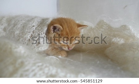 redhead little kitten cat asleep wrapped in knitted shawl downy video