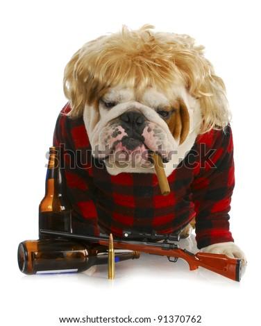redneck dog - english bulldog redneck smoking cigar and sitting beside gun and beer bottles - stock photo