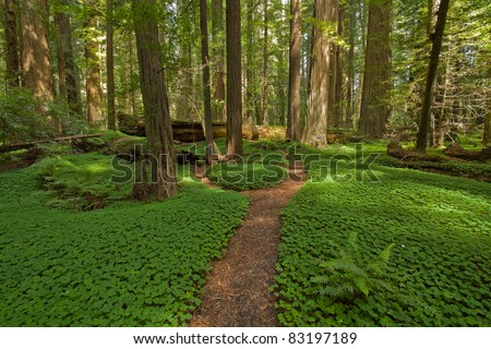 Redwood forest location: Avenue of the Giants, Humboldt Redwoods State Park,  California - stock photo