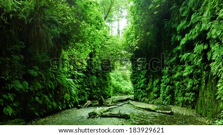 Redwood National Park 04 Moss covered wall in Fern Canyon California USA - stock photo