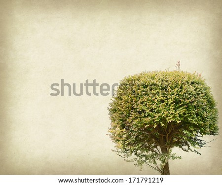 ree with old grunge antique paper texture - stock photo