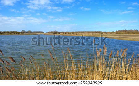 Reed along the shore of a lake in winter - stock photo