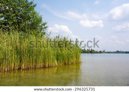 reed at the riverside, blue sky - stock photo