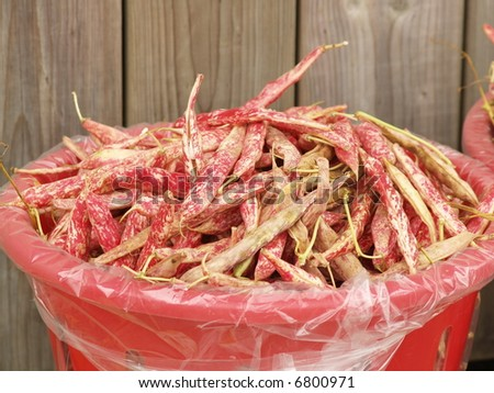 reed beans - stock photo