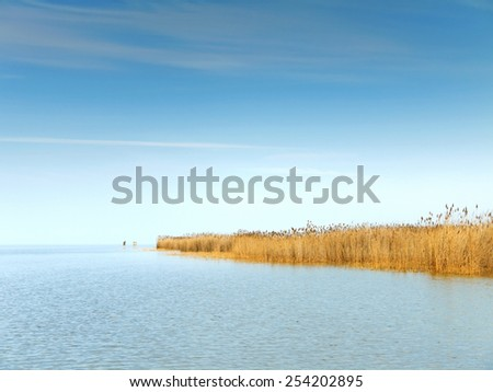 Reed belt at the lake Neusiedl, Burgenland. - stock photo