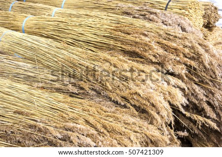 Reed, Bundled, As It Is Used For The Roofing In Mecklenburg, In Thatched