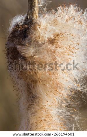 Reed in Pepsi Lake - stock photo