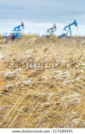 Reed in the wind with the oil pump in the background - stock photo