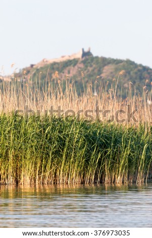 Reed landscape near the Lake Balaton,Hungary in spring