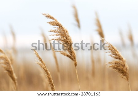 Reed,shallow dof