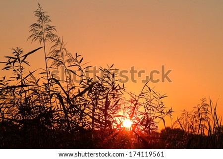 Reed silhouettes and halo around the sun at sunrise foretelling bad weather - stock photo