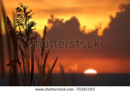 Reeds and orange sunset - stock photo