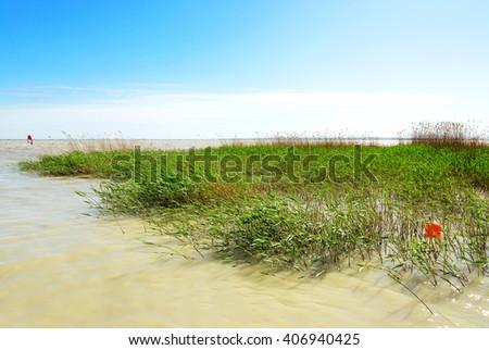 Reeds at lake Balaton, Hungary - stock photo