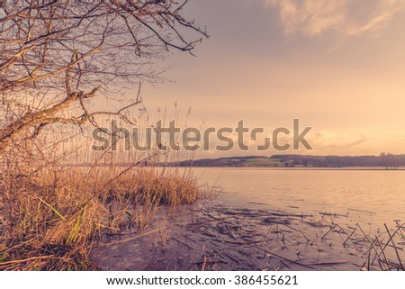 Reeds by a frozen lake in the morning - stock photo