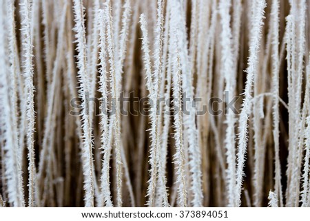 Reeds covered in some spiky soft rime - stock photo