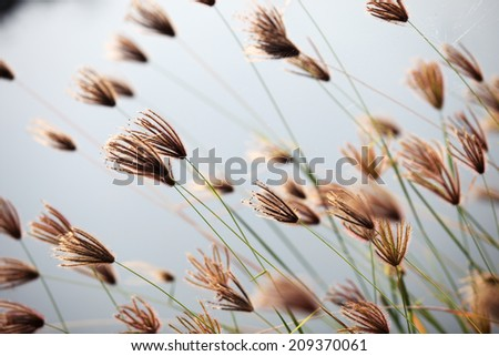 reeds grass - stock photo