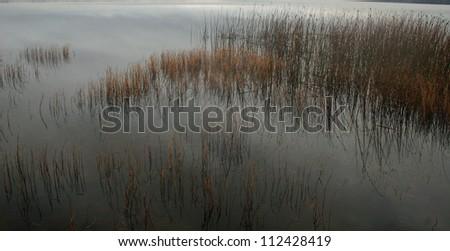 reeds in lake - stock photo