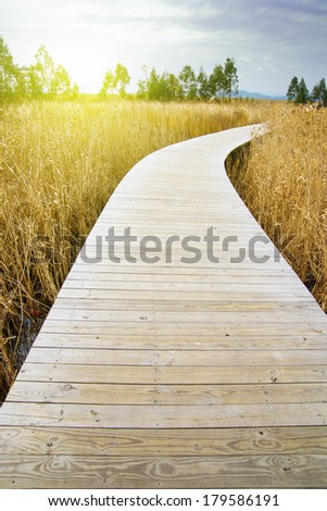 Reeds wooden corridor leading into the distance, expressing the concept of a peaceful future. - stock photo