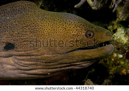 Reef and giant moray, Indian ocean, Maldives