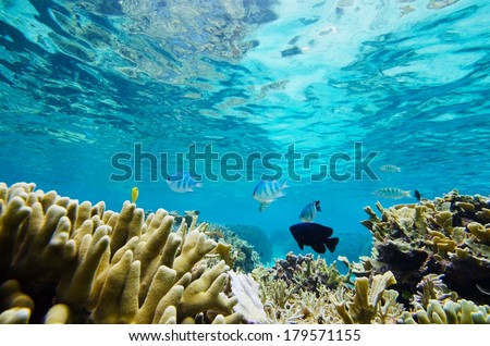 Reef and Tropical Fishes, Okinawa Prefecture/Japan, 2013/6/17.  - stock photo