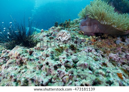 reef coral and reef fish at Chomphon Thailand