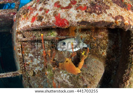 Reef Diving, Grand Cayman - stock photo