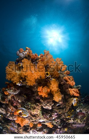 Reef, Indonesia, Lembeh, Asia - stock photo