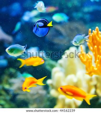 Reef life - stock photo