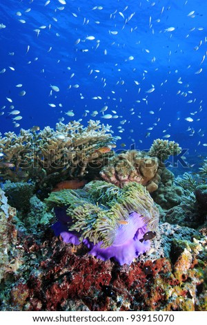 Reef live in the indian ocean