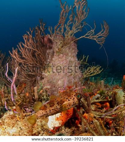 reef scene - stock photo
