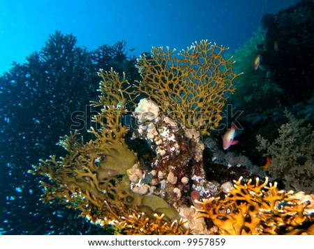 Reef scene with coral and fish