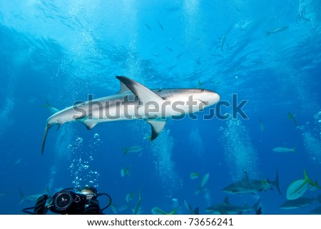 Reef_Shark_in_Nassau_Bahamas - stock photo