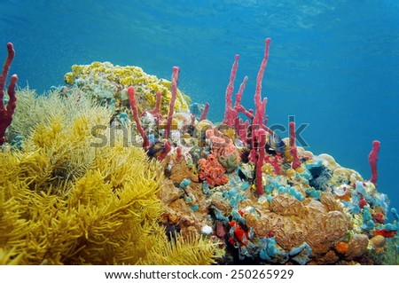 Reef underwater with colorful sea sponges and corals, Caribbean - stock photo